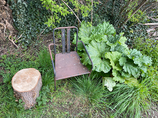 Seating, log and rhubarb on 1918 Allotment, Elder Stubbs Allotment, May 2021