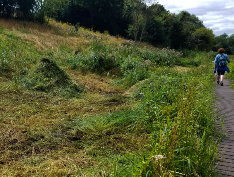 Freshly scythed reeds in Lye Valley keep the fen clear, while a boardwalk protects the peat.